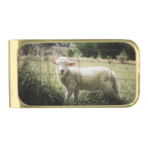 a little white lamb behind a fence in a field gold finish money clip