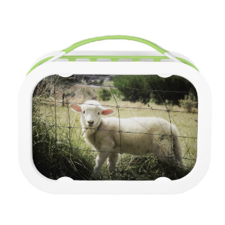 a little white lamb behind a fence in a field lunch box