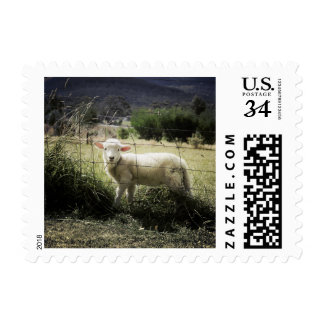 a little white lamb behind a fence in a field postage