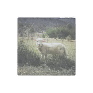 a little white lamb behind a fence in a field stone magnet