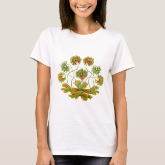 A Liverwort T-Shirt