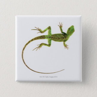 A lizard on pure white ground button