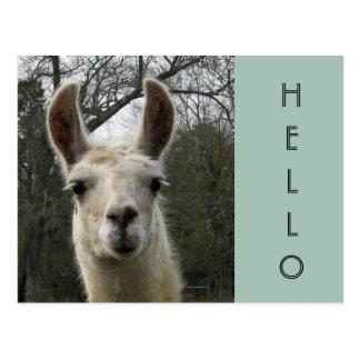 A Llama Hello Postcard