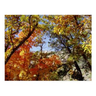 A lo largo del camino - árboles y Ridge Tarjetas Postales