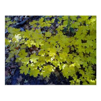 A lo largo del camino - hojas de arce en la tierra tarjeta postal