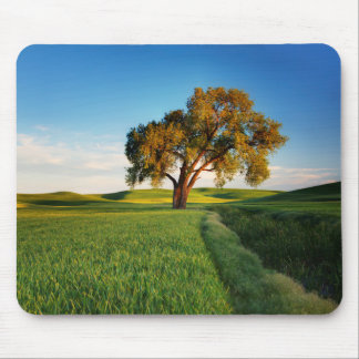 A lone tree surrounded by rolling hills of wheat mouse pad