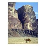 A lonely camel, Wadi Rum Desert, Jordan Desert Invitation