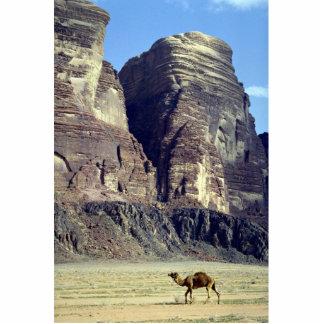 A lonely camel Wadi Rum Desert Jordan Desert Photo Cut Outs