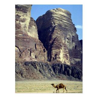 A lonely camel, Wadi Rum Desert, Jordan Desert Post Card