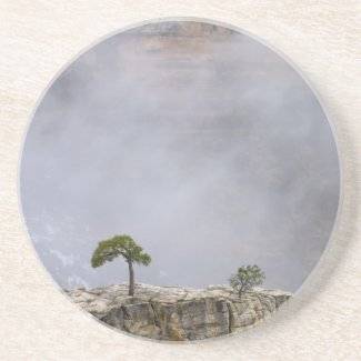 A Lonely Grand Canyon Tree Coasters