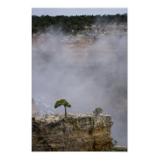 A Lonely Grand Canyon Tree Posters