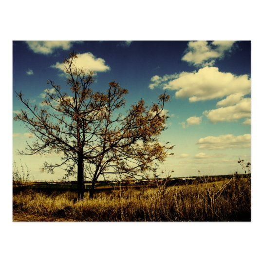 A lonely tree in a yellow dry field postcard