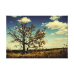 A lonely tree in the middle of a dry field stretched canvas print