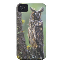 A long-eared owl perched on a tree branch near iPhone 4 cover