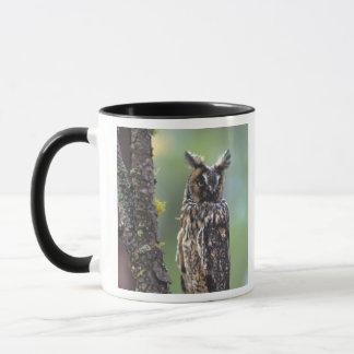 A long-eared owl perched on a tree branch near mug