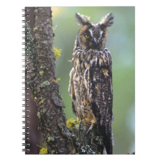 A long-eared owl perched on a tree branch near notebook