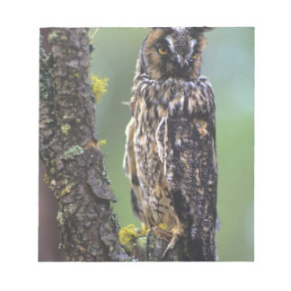 A long-eared owl perched on a tree branch near notepad