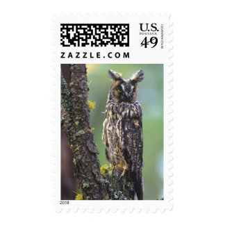 A long-eared owl perched on a tree branch near postage