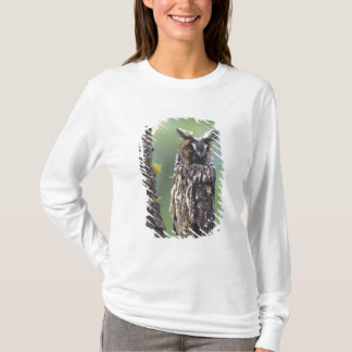 A long-eared owl perched on a tree branch near T-Shirt