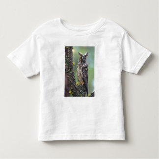 A long-eared owl perched on a tree branch near toddler t-shirt