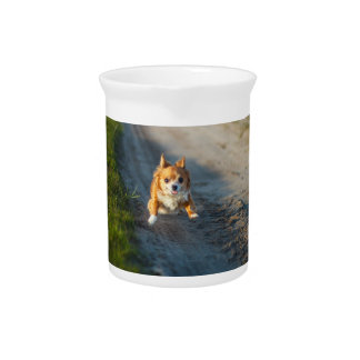 A long haired brown and white Chihuahua Running Beverage Pitcher