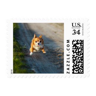 A long haired brown and white Chihuahua Running Postage Stamp