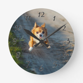 A long haired brown and white Chihuahua Running Round Clock
