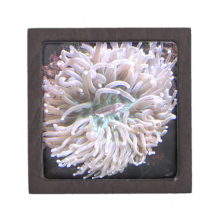 A Long Tentacle Plate Coral Gift Box