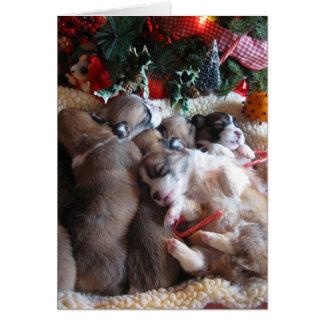 A Long Winter's Nap Corgi Puppy Christmas Cards