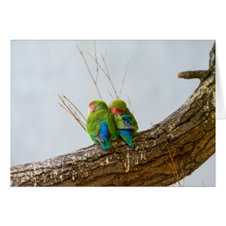A Lovebird Couple On A Branch Greeting Card