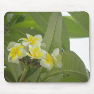 A Lovely Bunch Of Plumeria Mouse Pad