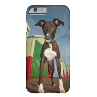 A Lurcher Standing In Front Of Some Beach Huts Barely There iPhone 6 Case