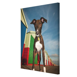A Lurcher Standing In Front Of Some Beach Huts Canvas Print