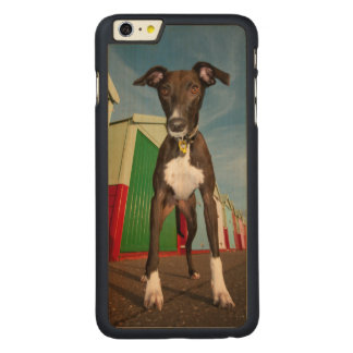 A Lurcher Standing In Front Of Some Beach Huts Carved Maple iPhone 6 Plus Case