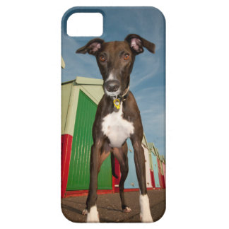 A Lurcher Standing In Front Of Some Beach Huts iPhone SE/5/5s Case