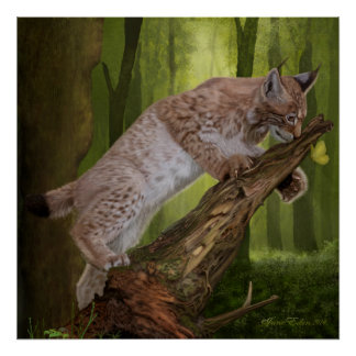 'A Lynx and a Butterfly' Art/Poster Poster