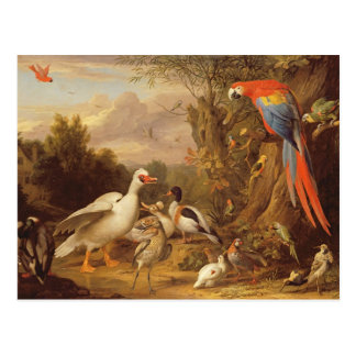 A Macaw, Ducks, Parrots and Other Birds in a Lands Postcard