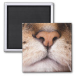 A macro image of a cat's nose and mouth. 2 inch square magnet