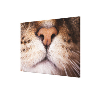 A macro image of a cat's nose and mouth. canvas prints