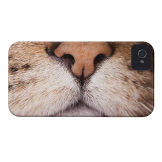 A macro image of a cat's nose and mouth. iPhone 4 cover