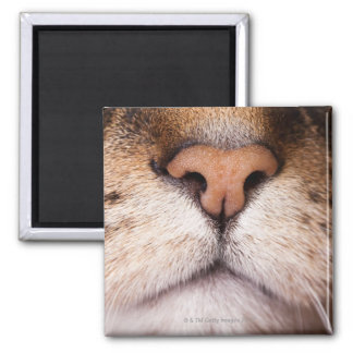 A macro image of a cat's nose and mouth. magnet