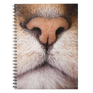 A macro image of a cat's nose and mouth. note book