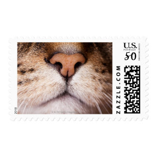 A macro image of a cat's nose and mouth. postage