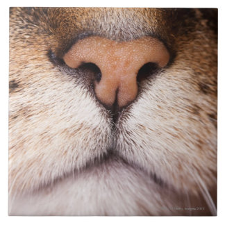 A macro image of a cat's nose and mouth. tile
