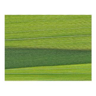 A Macro Photo of a Grass Leaf Postcard