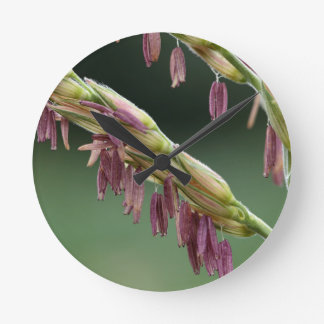 A macro photo of male maize flowers. round clock