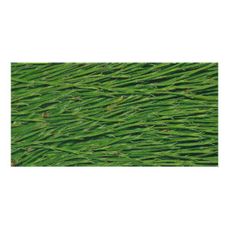 A Macro Photo of Snake Grass Leaves Card