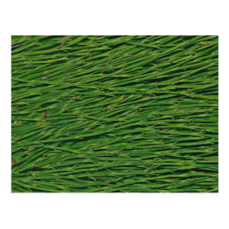 A Macro Photo of Snake Grass Leaves Postcard