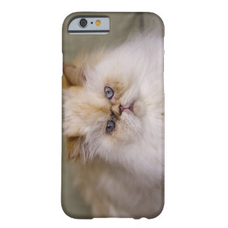 A mad, upset, reclining Flame Point Himalayan Barely There iPhone 6 Case