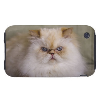 A mad, upset, reclining Flame Point Himalayan Tough iPhone 3 Cover